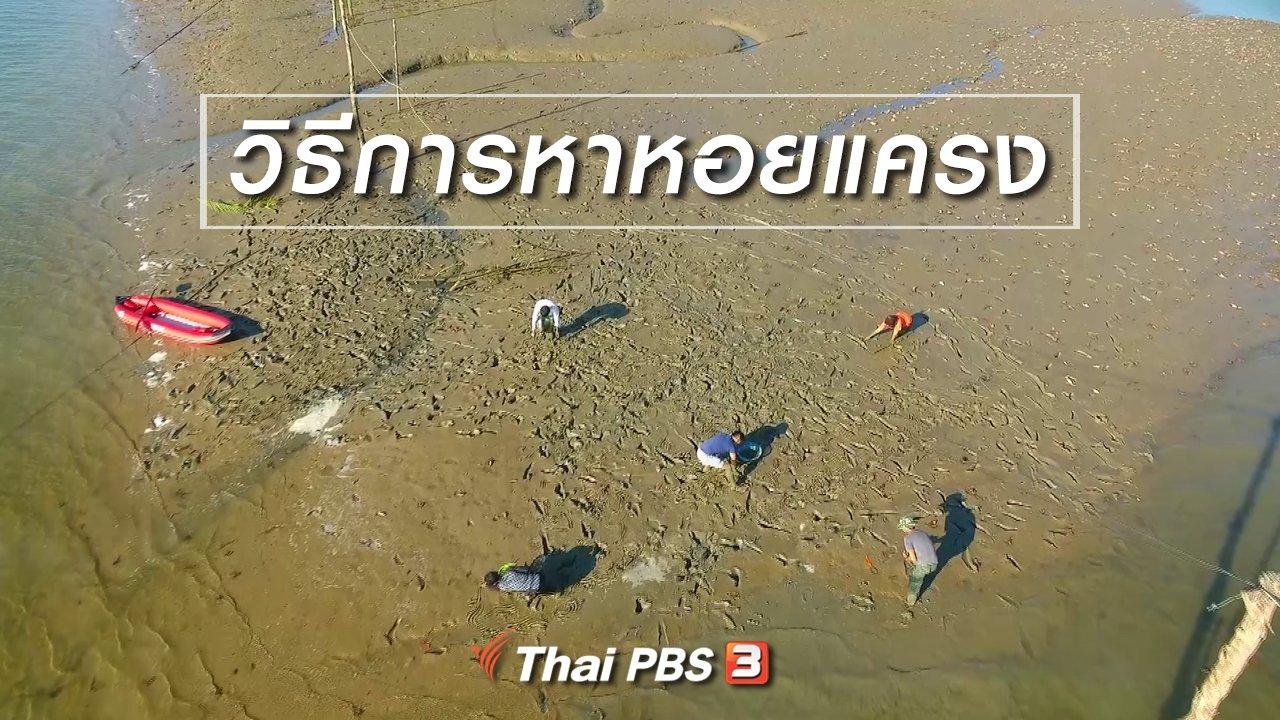 ทั่วถิ่นแดนไทย - เรียนรู้วิถีไทย : วิธีการหาหอยแครง