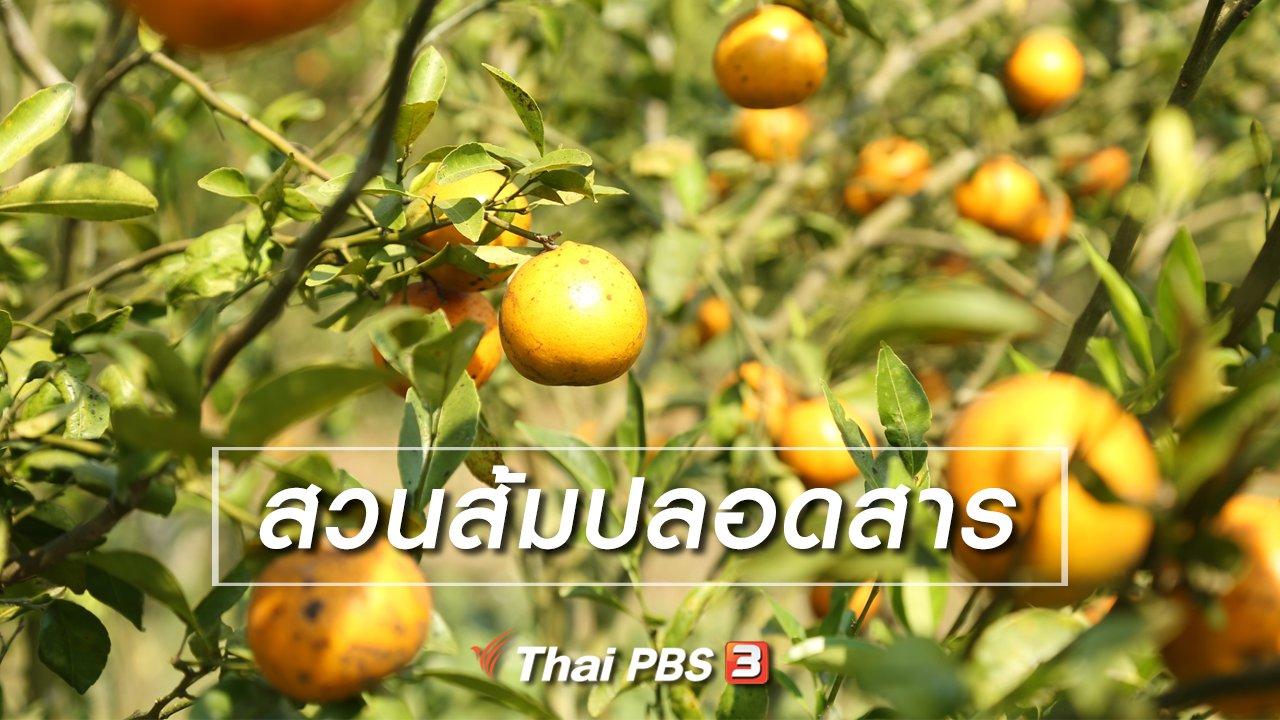 ทั่วถิ่นแดนไทย - เรียนรู้วิถีไทย : สวนส้มปลอดสาร