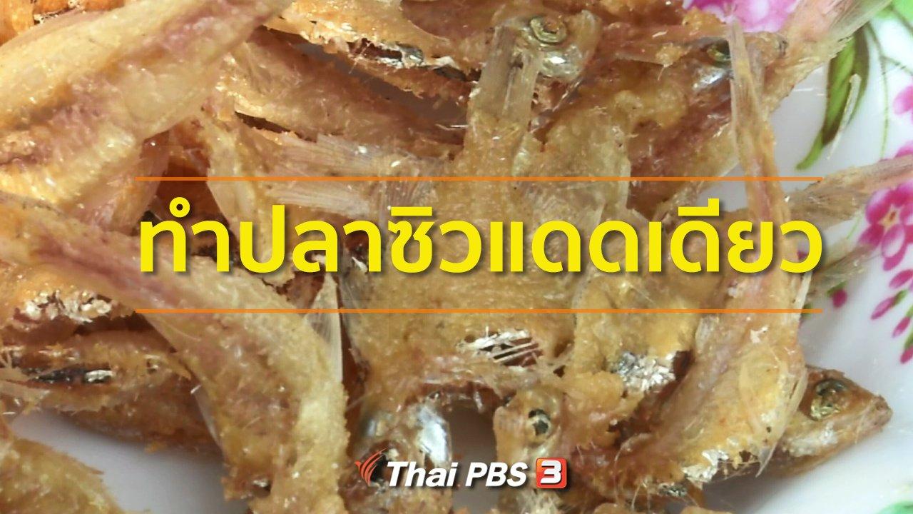 ทุกทิศทั่วไทย - อาชีพทั่วไทย :  แปรรูปปลาซิวขายสร้างรายได้