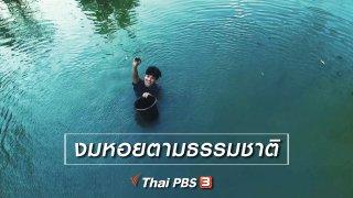 ทั่วถิ่นแดนไทย เรียนรู้วิถีไทย : งมหอยตามธรรมชาติ