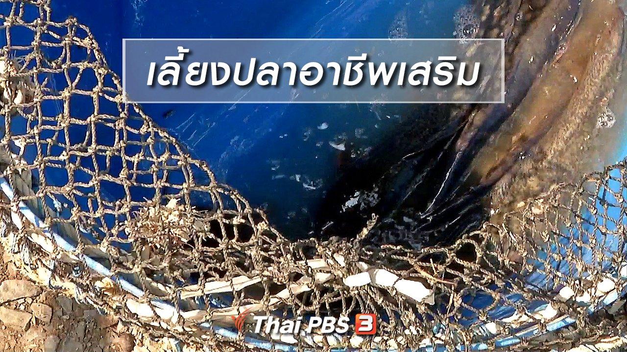 จับตาสถานการณ์ - ตะลุยทั่วไทย : เลี้ยงปลาอาชีพเสริม