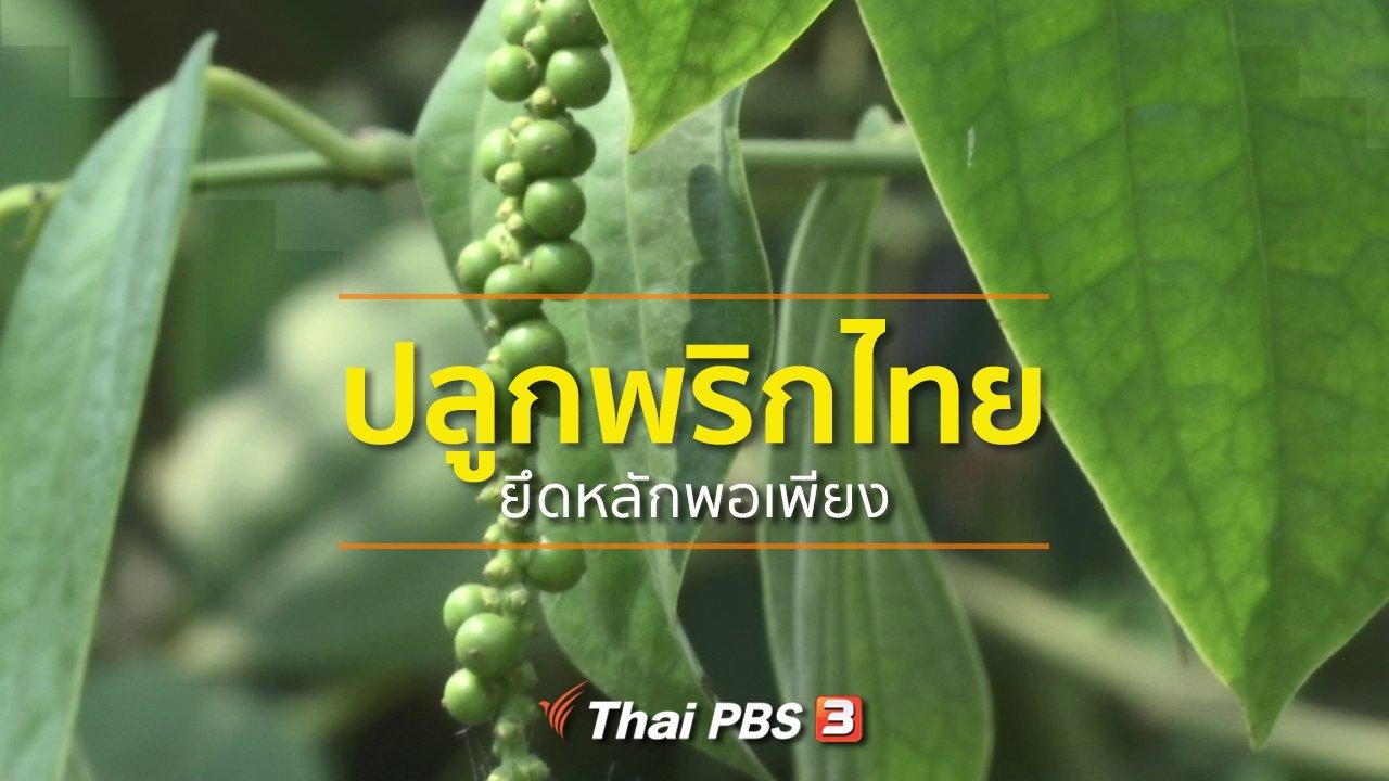 ทุกทิศทั่วไทย - อาชีพทั่วไทย : ปลูกพริกไทยยึดหลักพอเพียง