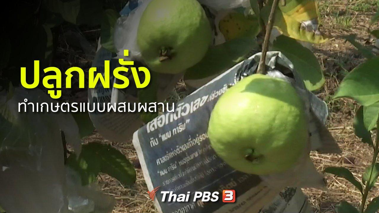 ทุกทิศทั่วไทย - อาชีพทั่วไทย : ปลูกฝรั่งและทำเกษตรแบบผสมผสาน