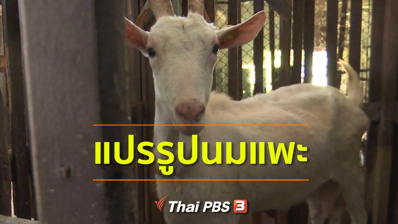 ทุกทิศทั่วไทย - อาชีพทั่วไทย : แปรรูปนมแพะ