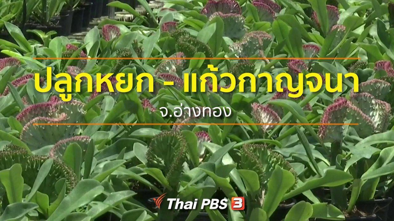 ทุกทิศทั่วไทย - อาชีพทั่วไทย : แหล่งปลูกต้นหยกและแก้วกาญจนา จ.อ่างทอง