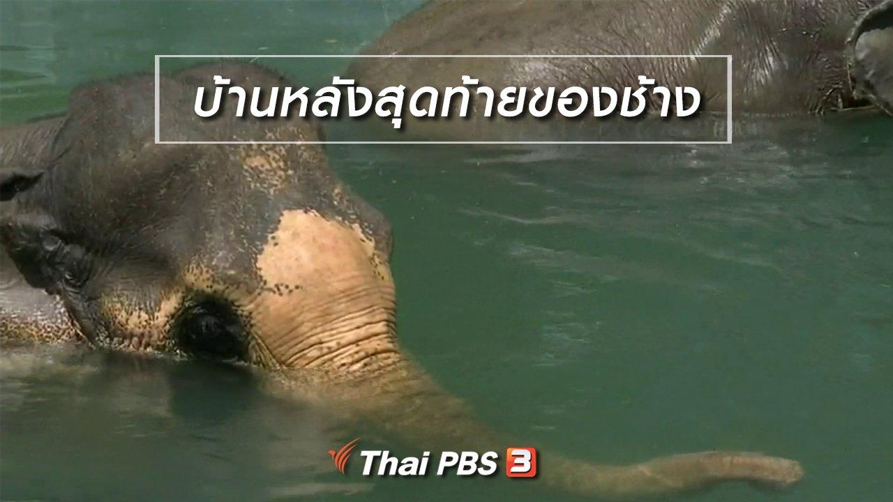 จับตาสถานการณ์ - ตะลุยทั่วไทย : บ้านหลังสุดท้ายของช้าง