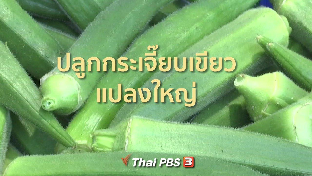 ทุกทิศทั่วไทย - ชุมชนทั่วไทย : กระเจี๊ยบเขียวแปลงใหญ่ส่งขายต่างประเทศ