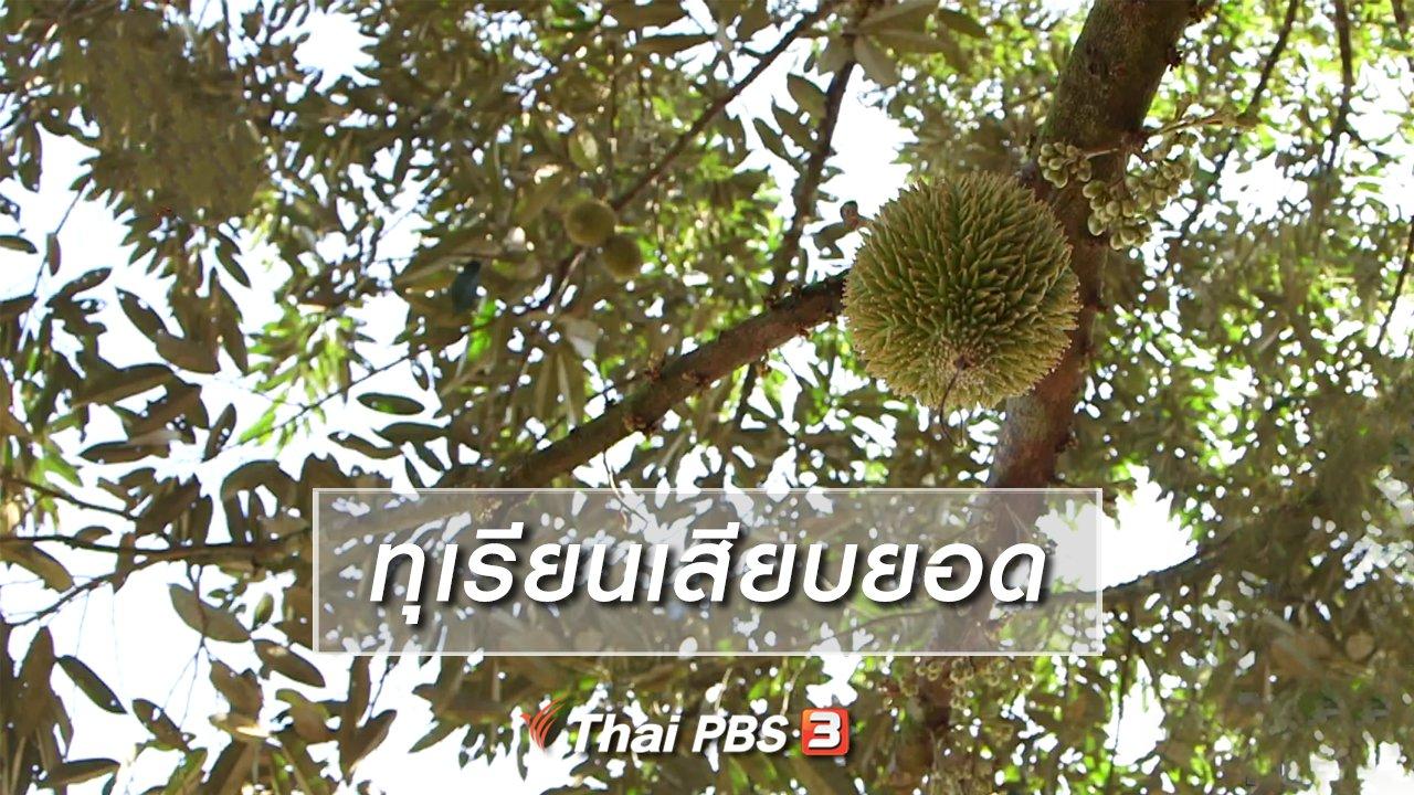 จับตาสถานการณ์ - ตะลุยทั่วไทย : ทุเรียนเสียบยอด