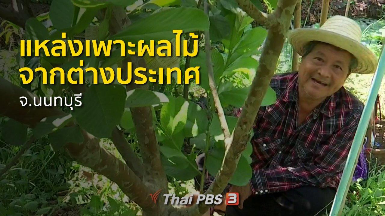 ทุกทิศทั่วไทย - ชุมชนทั่วไทย : แหล่งเพาะพันธุ์ผลไม้จากต่างประเทศ จ.นนทบุรี