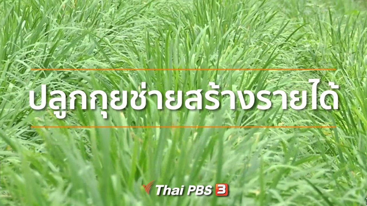 ทุกทิศทั่วไทย - อาชีพทั่วไทย : ปลูกกุยช่ายสร้างรายได้
