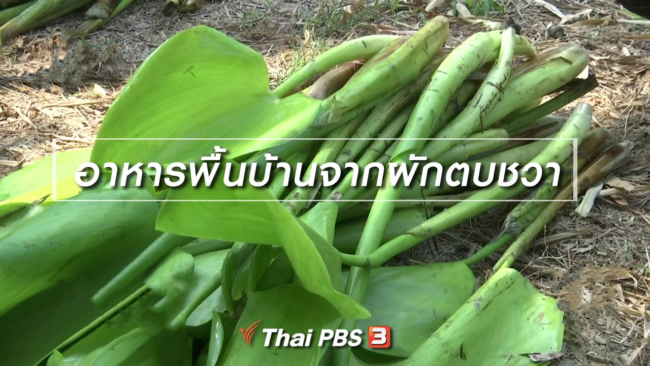 ไทยบันเทิง - อิ่มมนต์รส : อาหารพื้นบ้านจากผักตบชวา