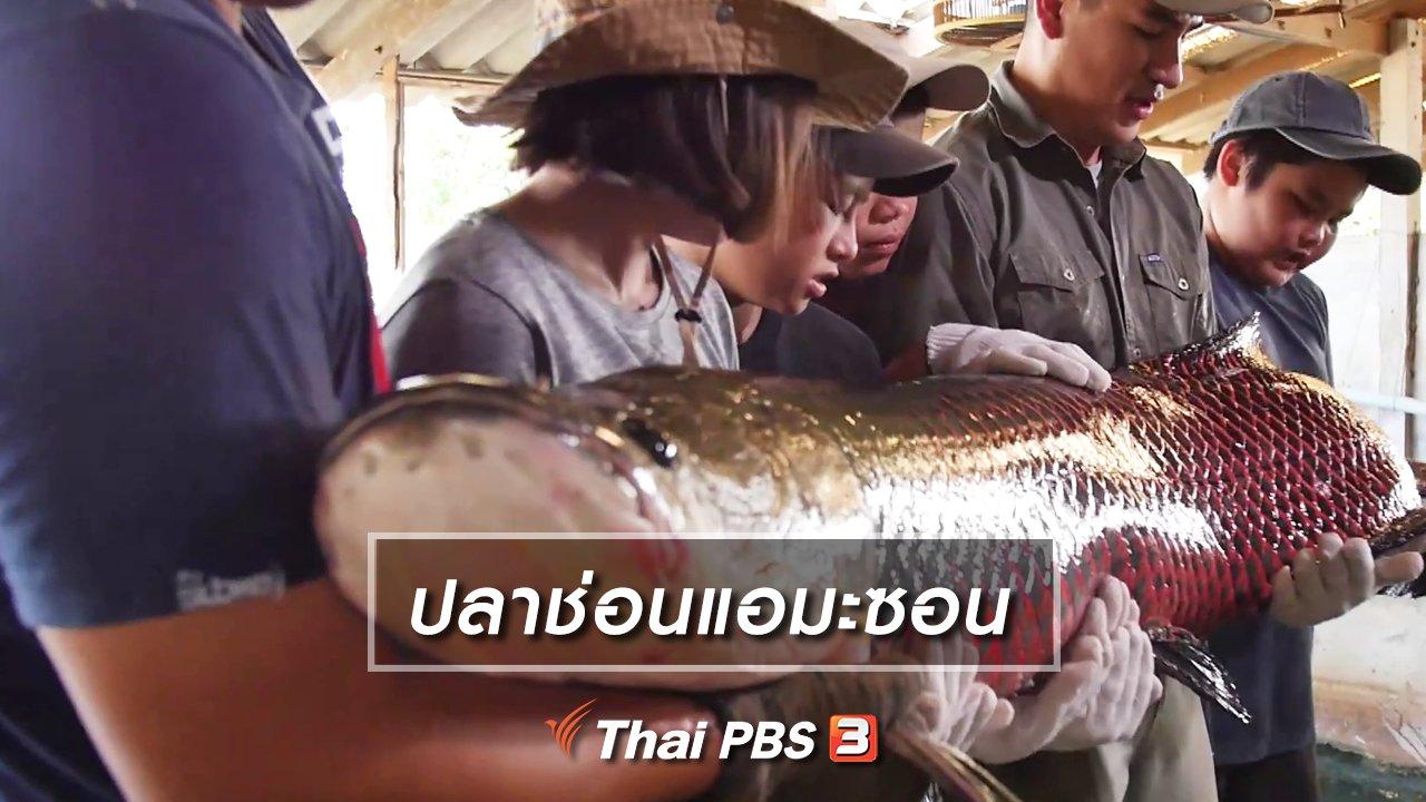 Kid Rangers ปฏิบัติการเด็กช่างคิด - คิดส์เรียนรู้ : ปลาช่อนแอมะซอน