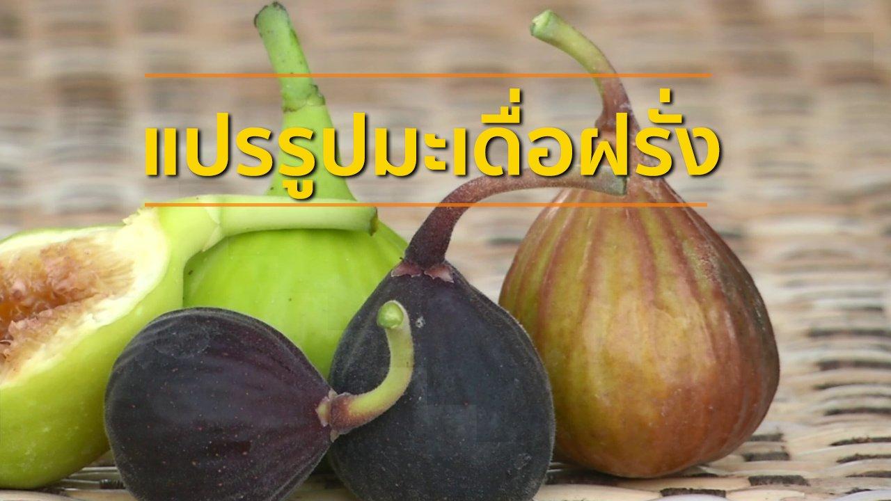 ทุกทิศทั่วไทย - อาชีพทั่วไทย : แปรรูปมะเดื่อฝรั่งส่งขาย