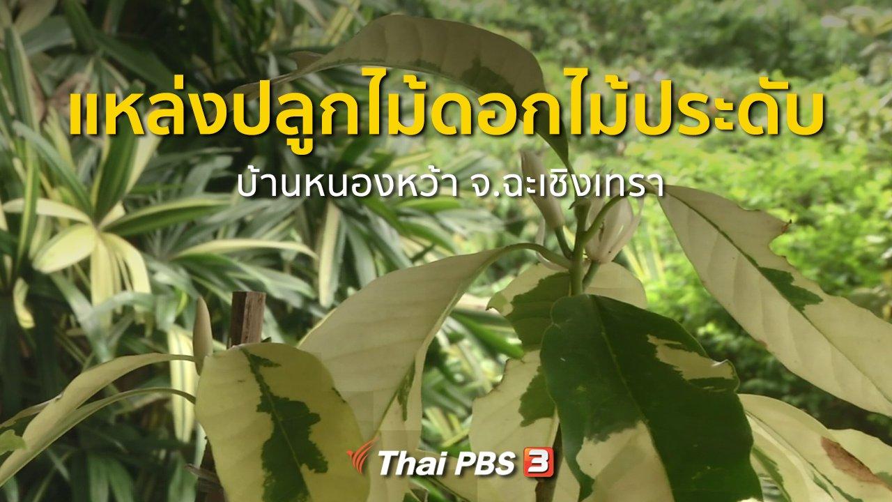 ทุกทิศทั่วไทย - อาชีพทั่วไทย : แหล่งปลูกไม้ดอกไม้ประดับที่บ้านหนองหว้า