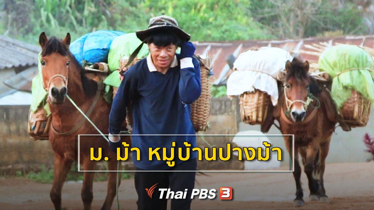 ซีรีส์วิถีคน - ม. ม้า หมู่บ้านปางม้า