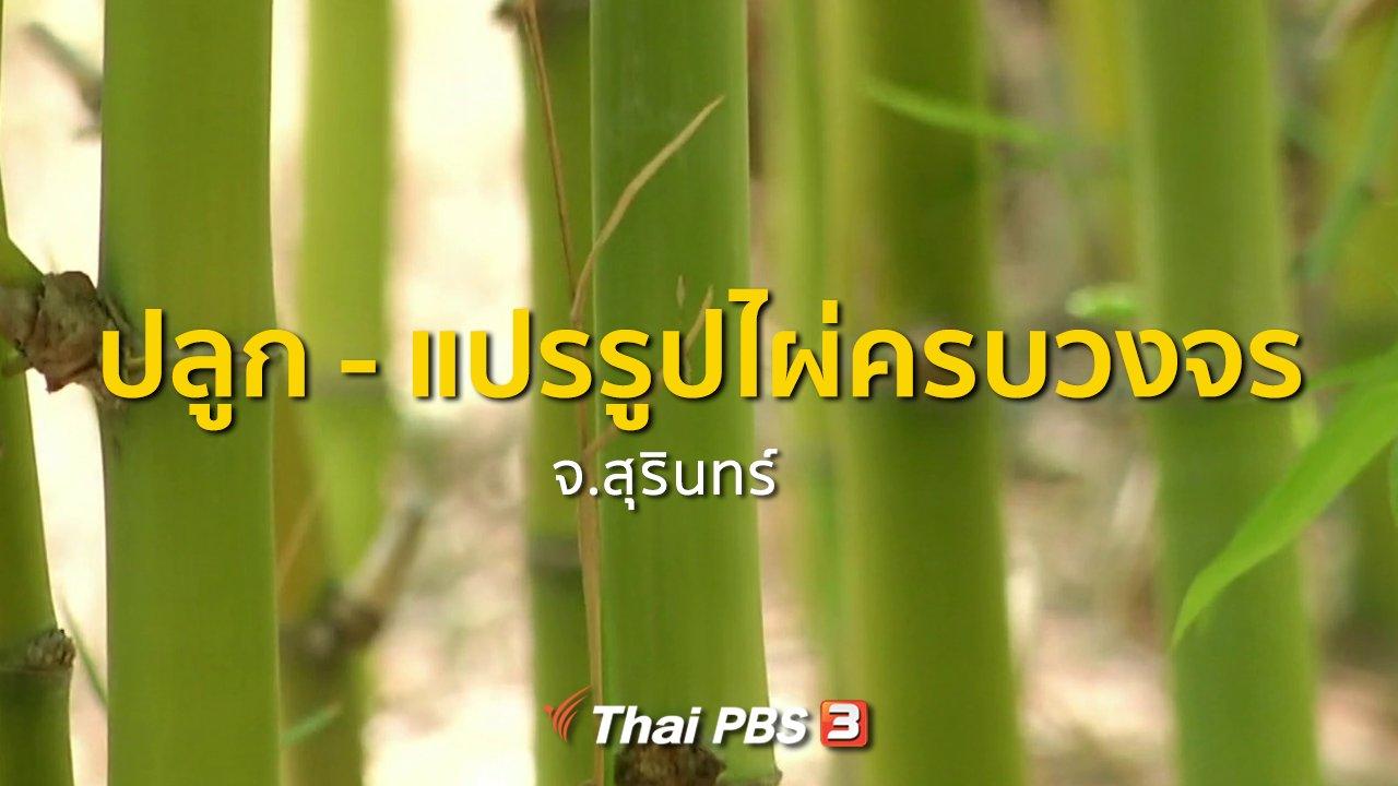 ทุกทิศทั่วไทย - อาชีพทั่วไทย : ปลูก - แปรรูปไผ่ครบวงจร จ.สุรินทร์