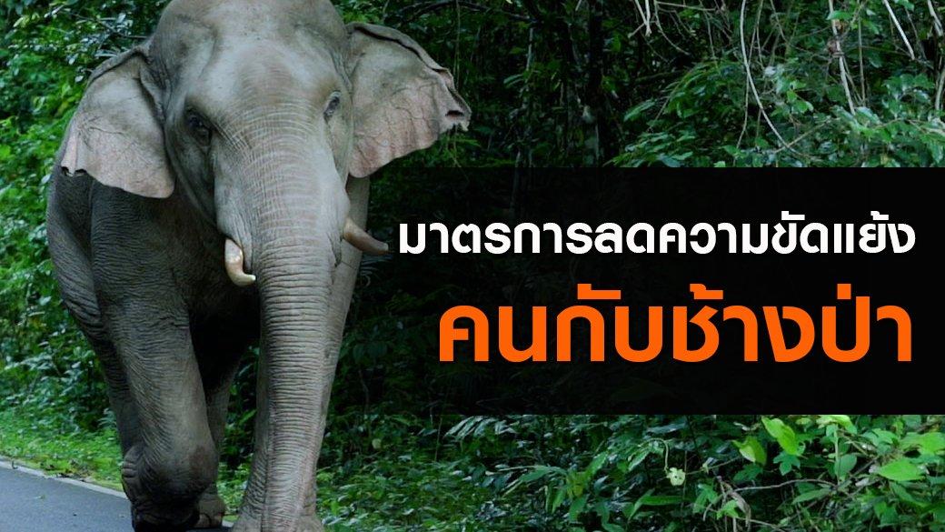 """สัตว์ป่วนเมือง - มาตรการลดความขัดแย้ง """"คนกับช้างป่า"""""""