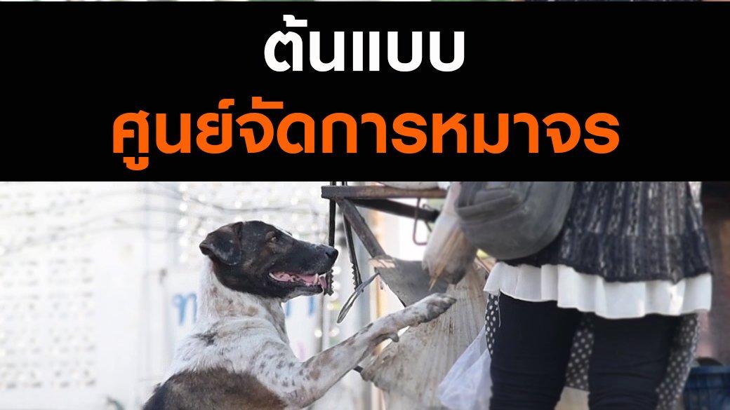 สัตว์ป่วนเมือง - ต้นแบบศูนย์จัดการหมาจร