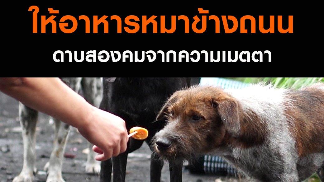 สัตว์ป่วนเมือง - ให้อาหารหมาข้างถนน ดาบสองคมจากความเมตตา
