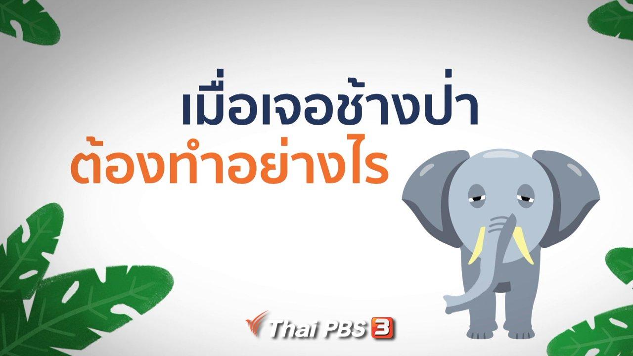 คิดส์ทันข่าว - ข้อควรปฏิบัติเมื่อเจอช้างป่า