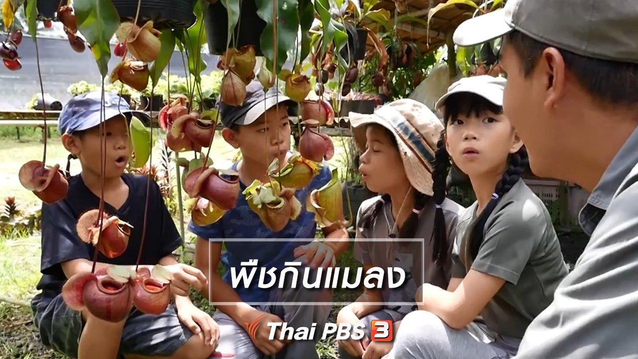 Kid Rangers ปฏิบัติการเด็กช่างคิด - คิดส์เรียนรู้ : พืชกินแมลง