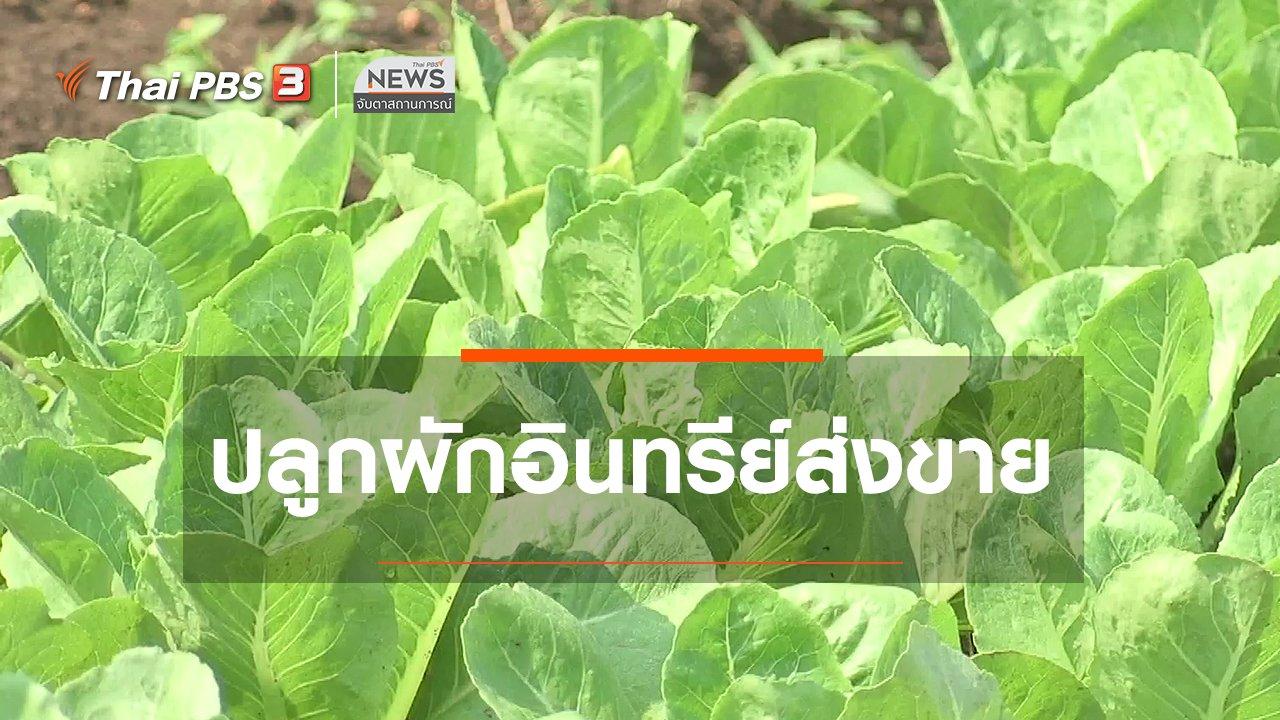 จับตาสถานการณ์ - ตะลุยทั่วไทย : ปลูกผักอินทรีย์ส่งขาย