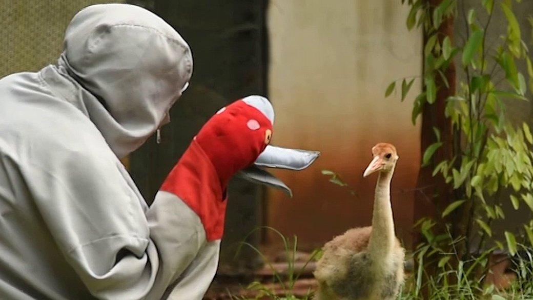 สัตว์ป่วนเมือง - ฝึกนกให้อยู่เป็น ก่อนปล่อยคืนธรรมชาติ