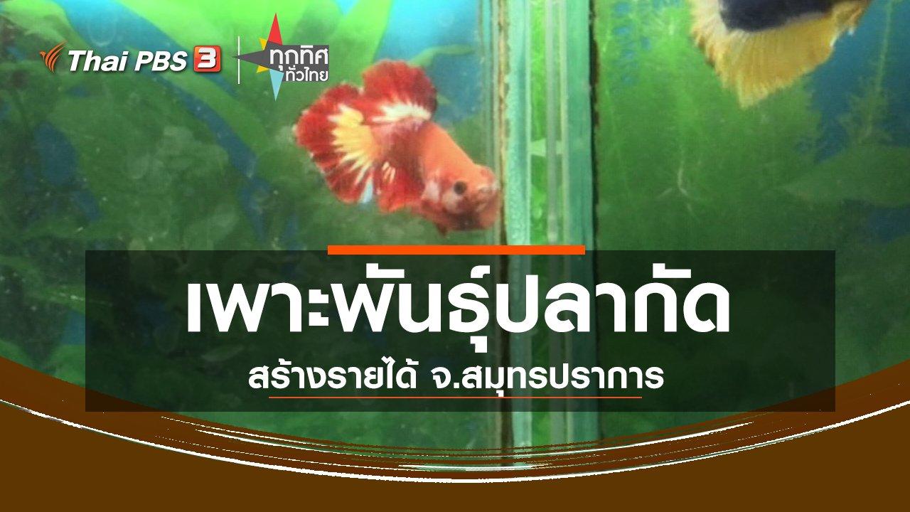 ทุกทิศทั่วไทย - อาชีพทั่วไทย : เพาะพันธุ์ปลากัดสวยงามสร้างรายได้ จ.สมุทรปราการ