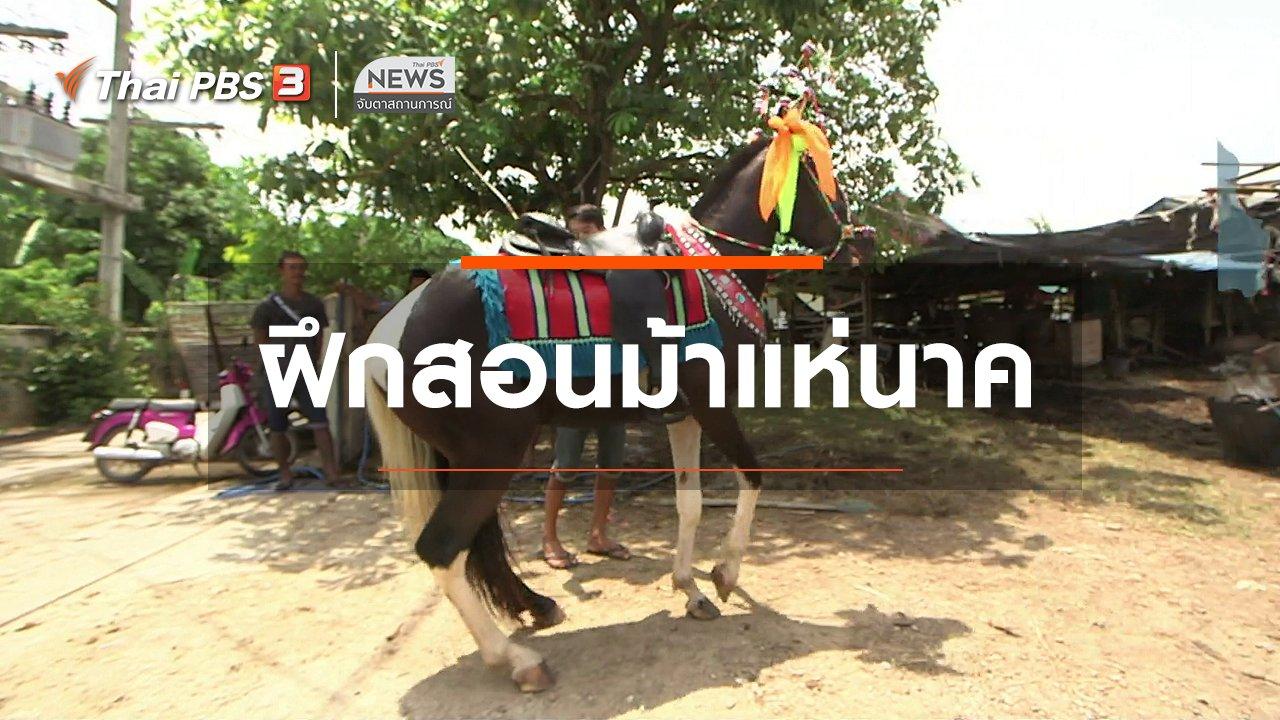 จับตาสถานการณ์ - ตะลุยทั่วไทย : ฝึกสอนม้าแห่นาค
