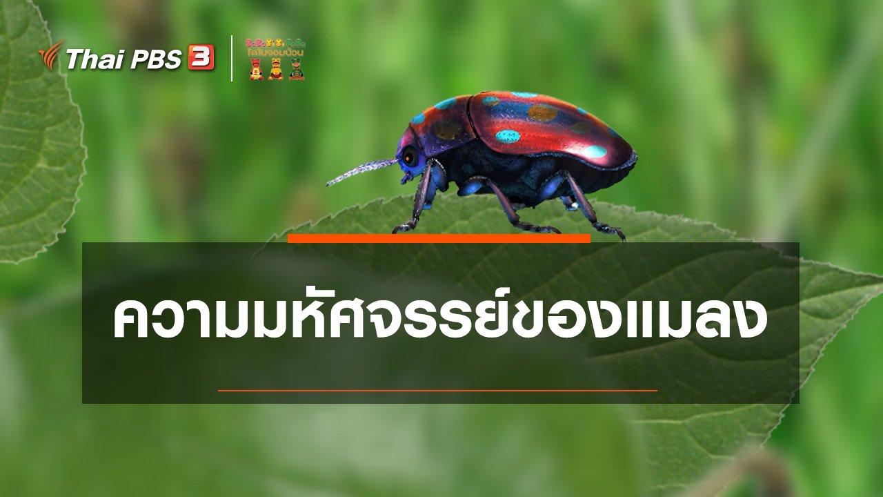 TataTitiToto ไดโนมหัศจรรย์ - เกร็ดน่ารู้กับตาต้าตีตี้โตโต้ : ความมหัศจรรย์ของแมลง