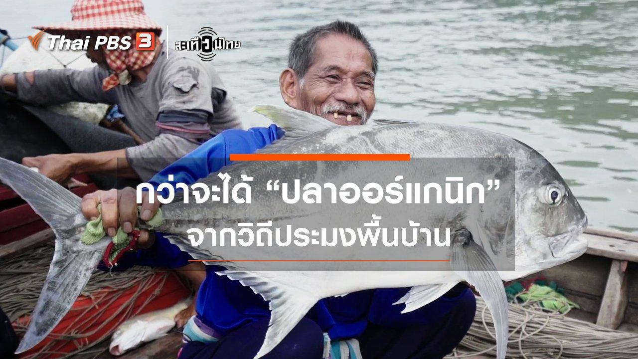 """สะเทือนไทย - กว่าจะได้ """"ปลาออร์แกนิก"""" จากวิถีประมงพื้นบ้าน"""