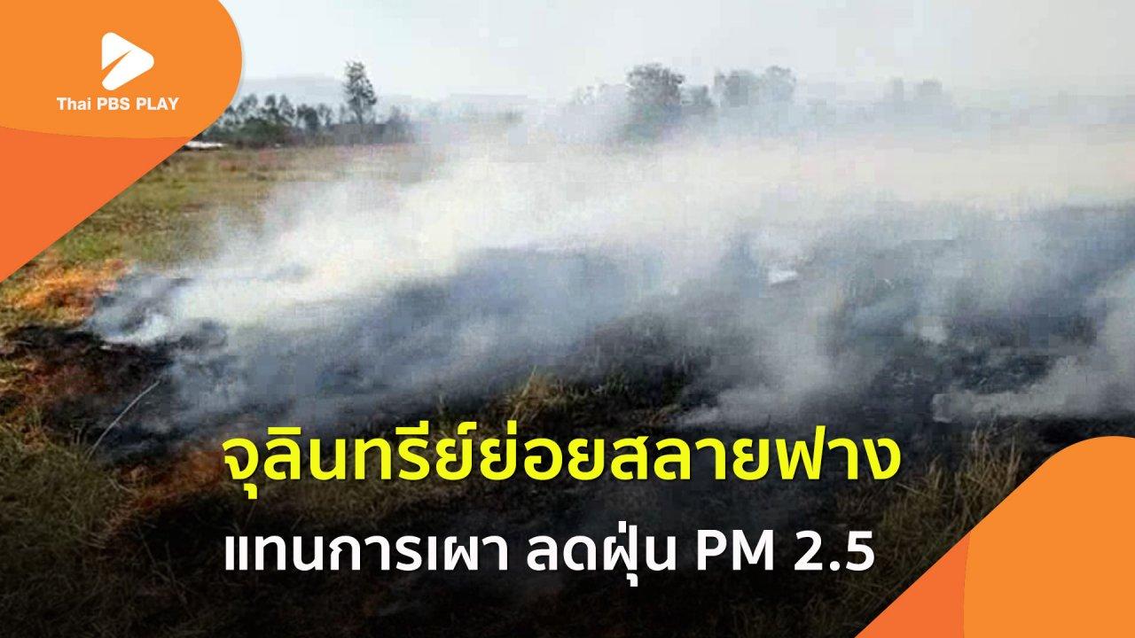 Thai PBS Play - จุลินทรีย์ย่อยสลายฟาง-ตอซัง แทนการเผา
