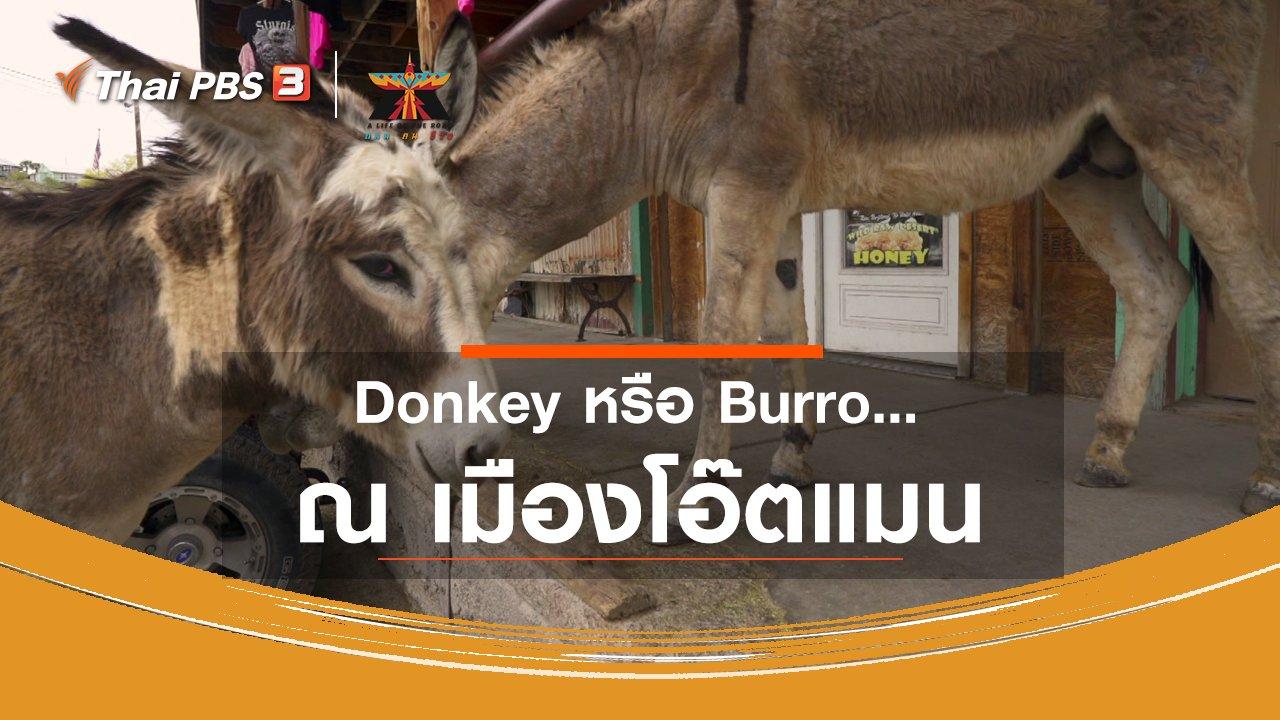 A Life on the Road  ถนน คน ชีวิต - เรื่องเล่าการเดินทาง : Donkey หรือ Burro ณ เมืองโอ๊ตแมน