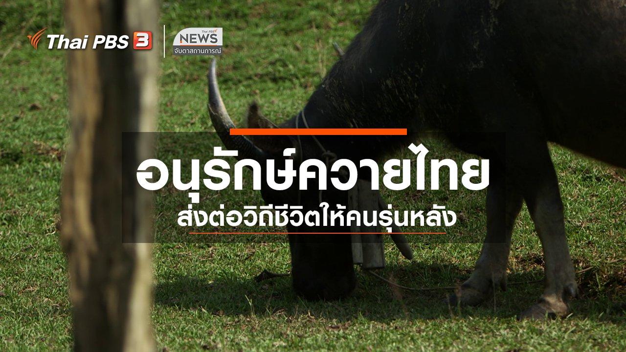 จับตาสถานการณ์ - ตะลุยทั่วไทย : อนุรักษ์ควายไทย