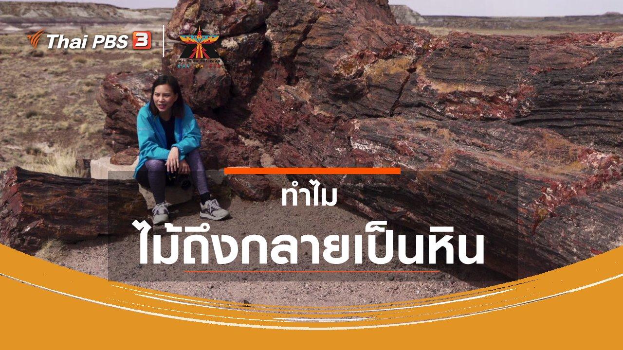 A Life on the Road  ถนน คน ชีวิต - เรื่องเล่าการเดินทาง : ทำไมไม้ถึงกลายเป็นหิน