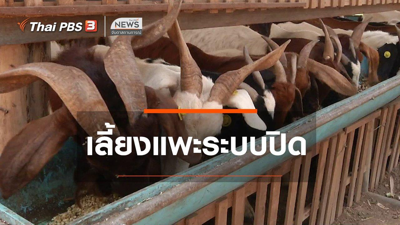 จับตาสถานการณ์ - ตะลุยทั่วไทย : เลี้ยงแพะระบบปิด