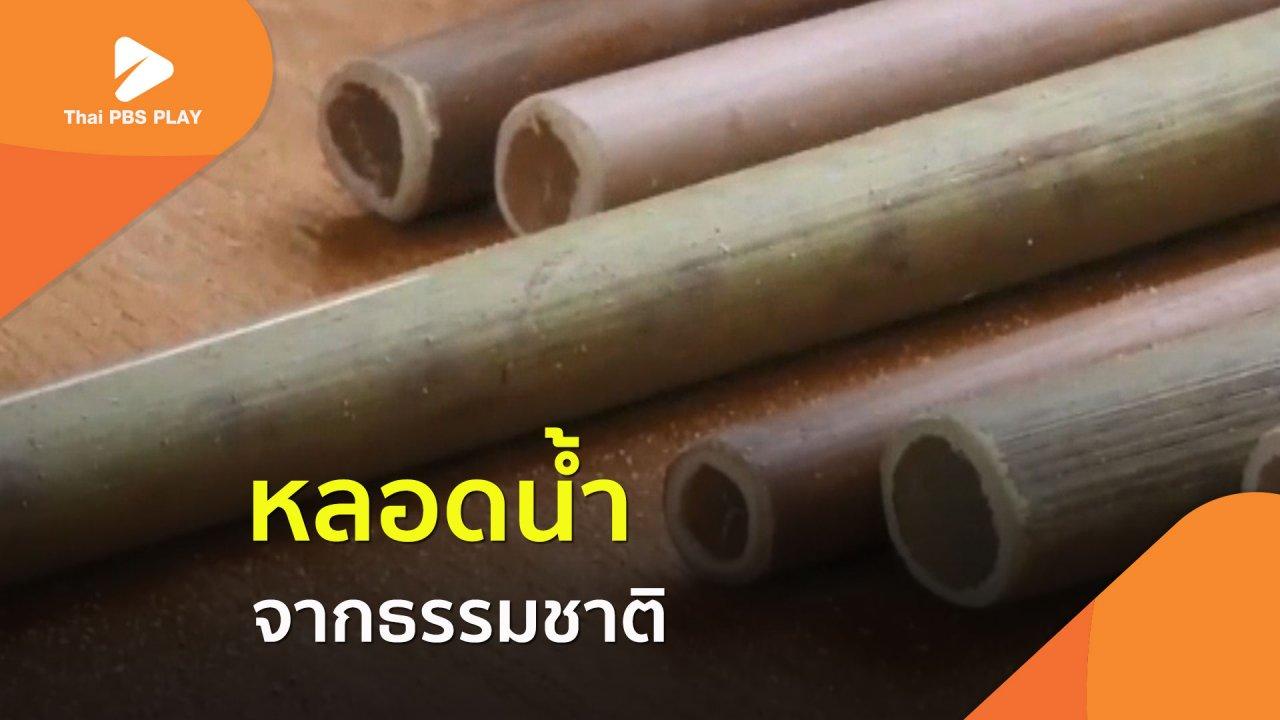 Thai PBS Play - ลดการใช้พลาสติก ด้วยหลอดน้ำจากธรรมชาติ
