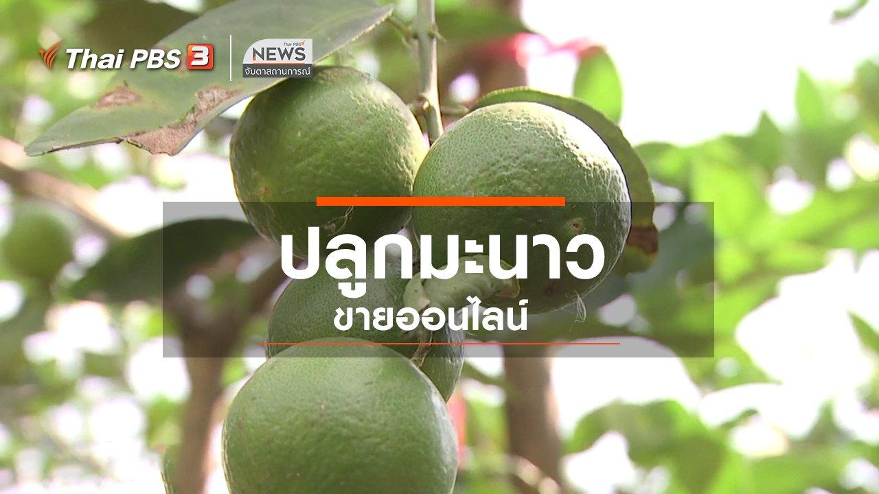 จับตาสถานการณ์ - ตะลุยทั่วไทย : ปลูกมะนาวขายออนไลน์