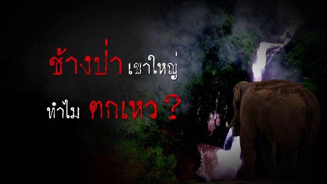 ความจริงไม่ตาย - ช้างป่าตกเหว