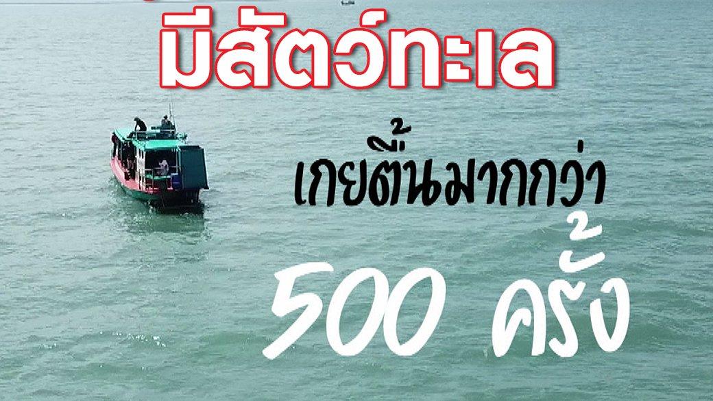 2 องศา วิกฤตอากาศเปลี่ยน - รู้หรือไม่...ปี 2560 มีสัตว์ทะเลเกยตื้นมากกว่า 500 ครั้ง!!