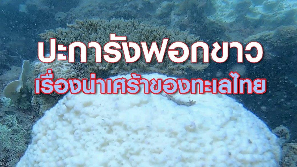 """2 องศา วิกฤตอากาศเปลี่ยน - """"ปะการังฟอกขาว"""" เรื่องน่าเศร้าของทะเลไทย"""