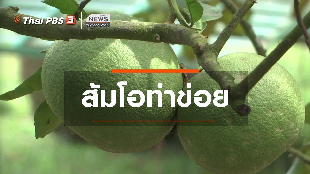 จับตาสถานการณ์ - ตะลุยทั่วไทย : ส้มโอท่าข่อย