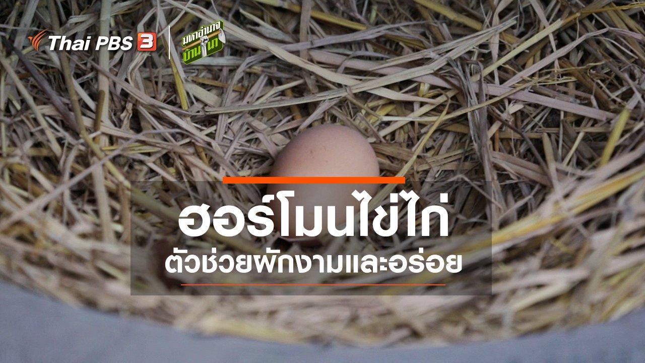 มหาอำนาจบ้านนา - ฮอร์โมนไข่ไก่ ตัวช่วยผักงามและอร่อย