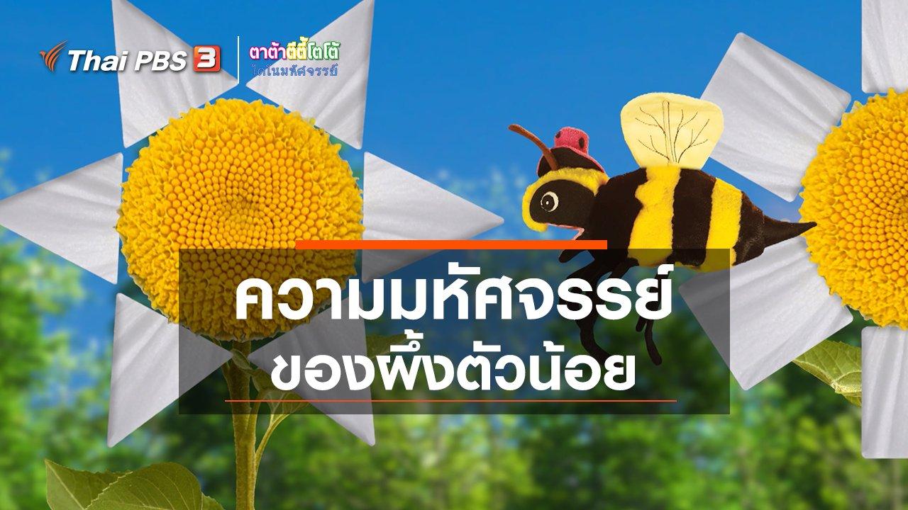 TataTitiToto ไดโนมหัศจรรย์ - เกร็ดน่ารู้กับตาต้าตีตี้โตโต้ : ความมหัศจรรย์ของผึ้งตัวน้อย