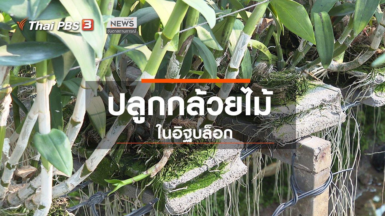 จับตาสถานการณ์ - ตะลุยทั่วไทย : ปลูกกล้วยไม้ในอิฐบล็อก