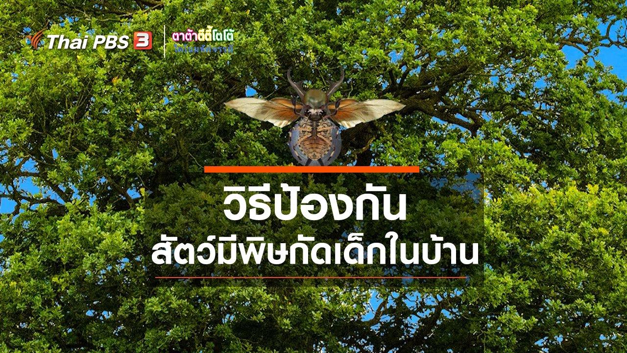 TataTitiToto ไดโนมหัศจรรย์ - เกร็ดน่ารู้กับตาต้าตีตี้โตโต้ : วิธีป้องกันสัตว์มีพิษกัดเด็กในบ้าน