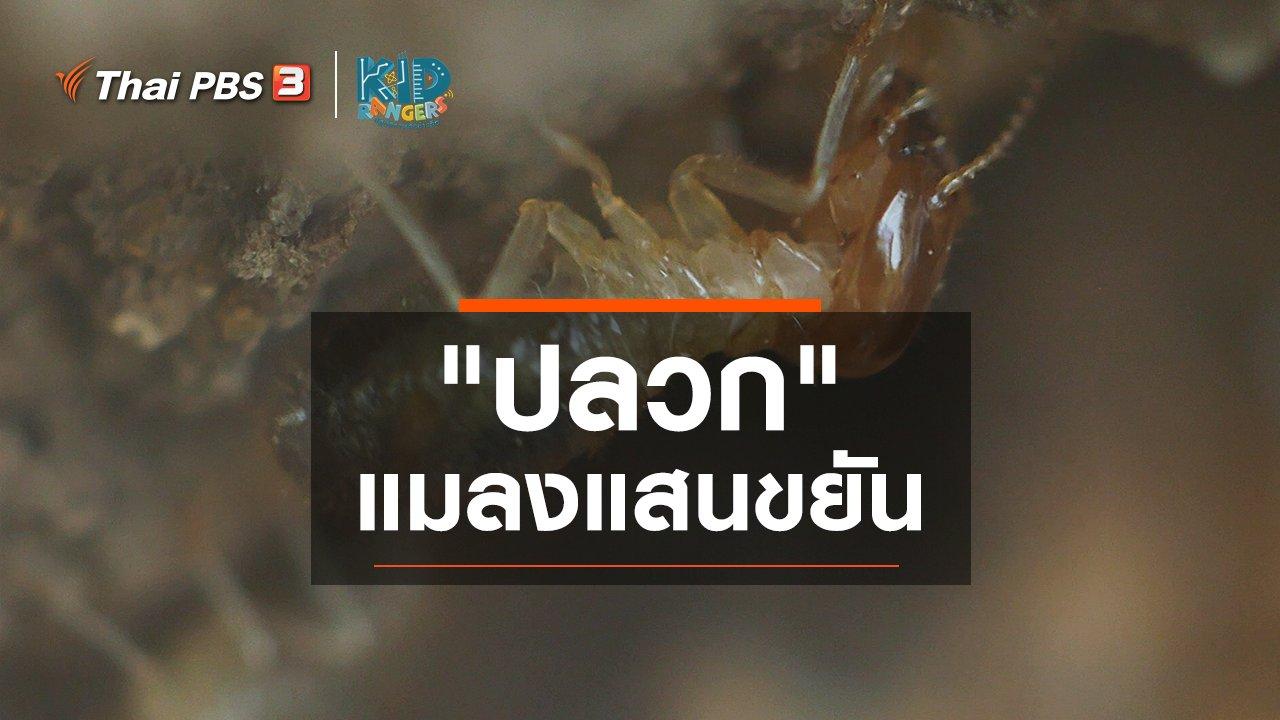 """Kid Rangers ปฏิบัติการเด็กช่างคิด - คิดส์เรียนรู้ : """"ปลวก"""" แมลงแสนขยัน"""
