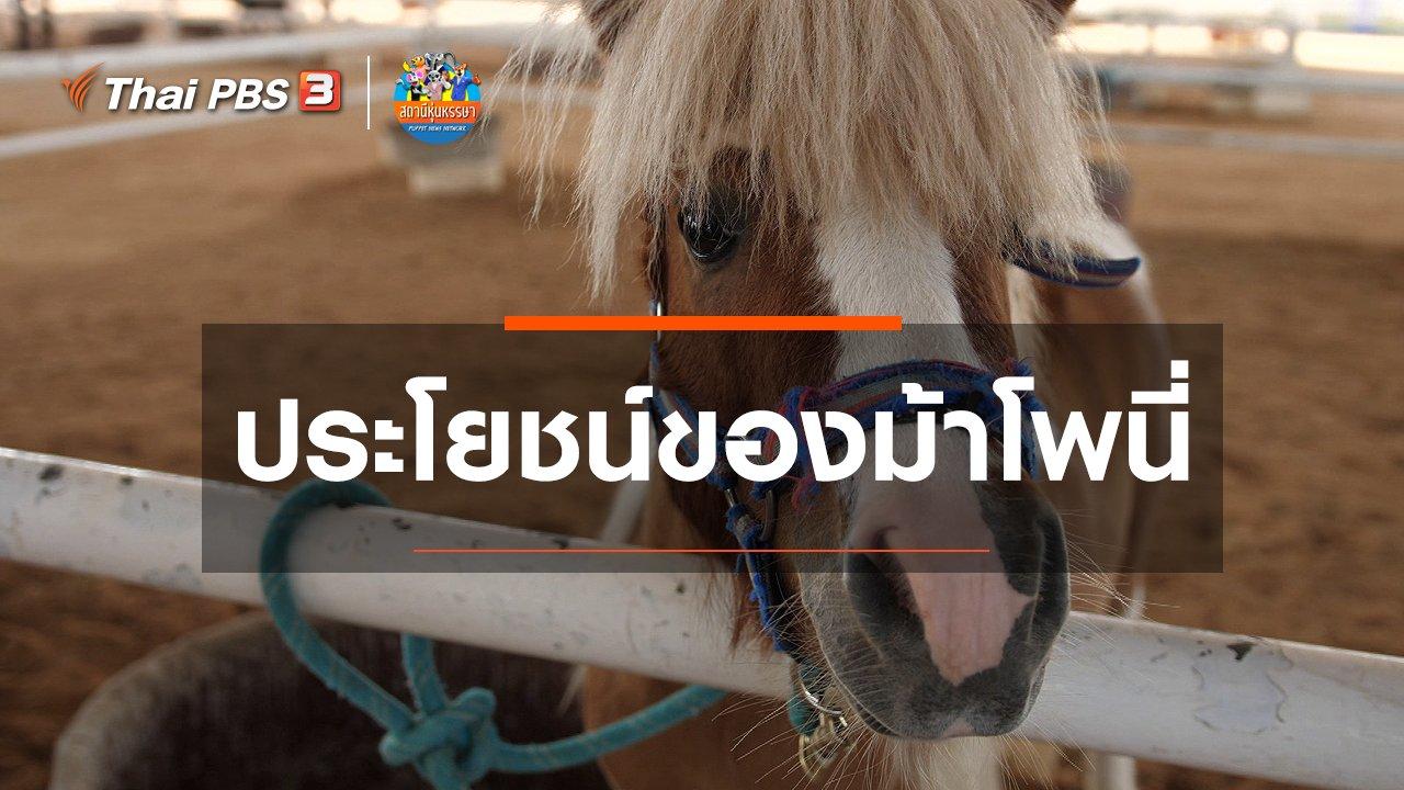 สถานีหุ่นหรรษา - หุ่นเล่าข่าว : ประโยชน์ของม้าโพนี่