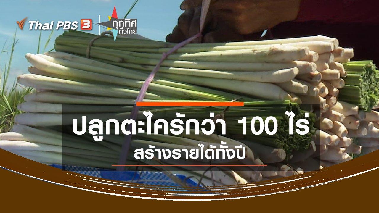 ทุกทิศทั่วไทย - ปลูกตะไคร้กว่า 100 ไร่ สร้างรายได้ทั้งปี