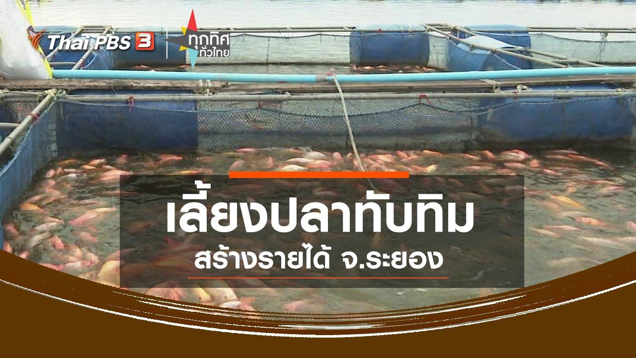 ทุกทิศทั่วไทย - เลี้ยงปลาทับทิมสร้างรายได้ จ.ระยอง